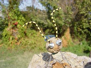 insecte-roger-poupon
